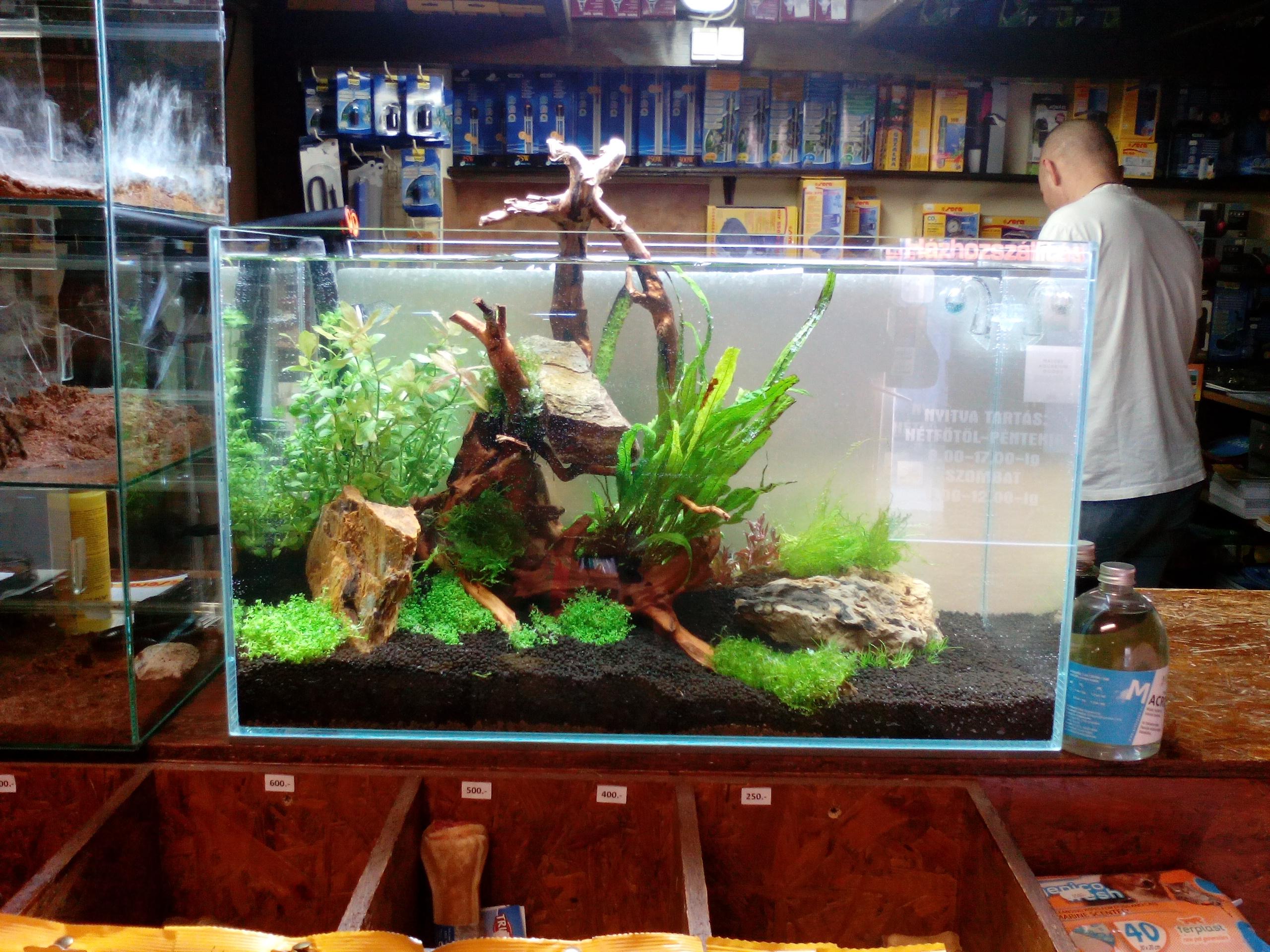 növényes akvárium