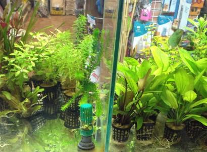 Vízinövények helyes beültetése