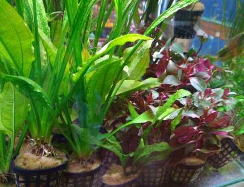 Akváriumi növények érkeztek!