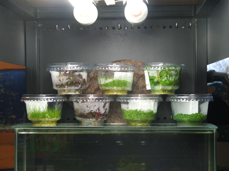green aqua zselés növények