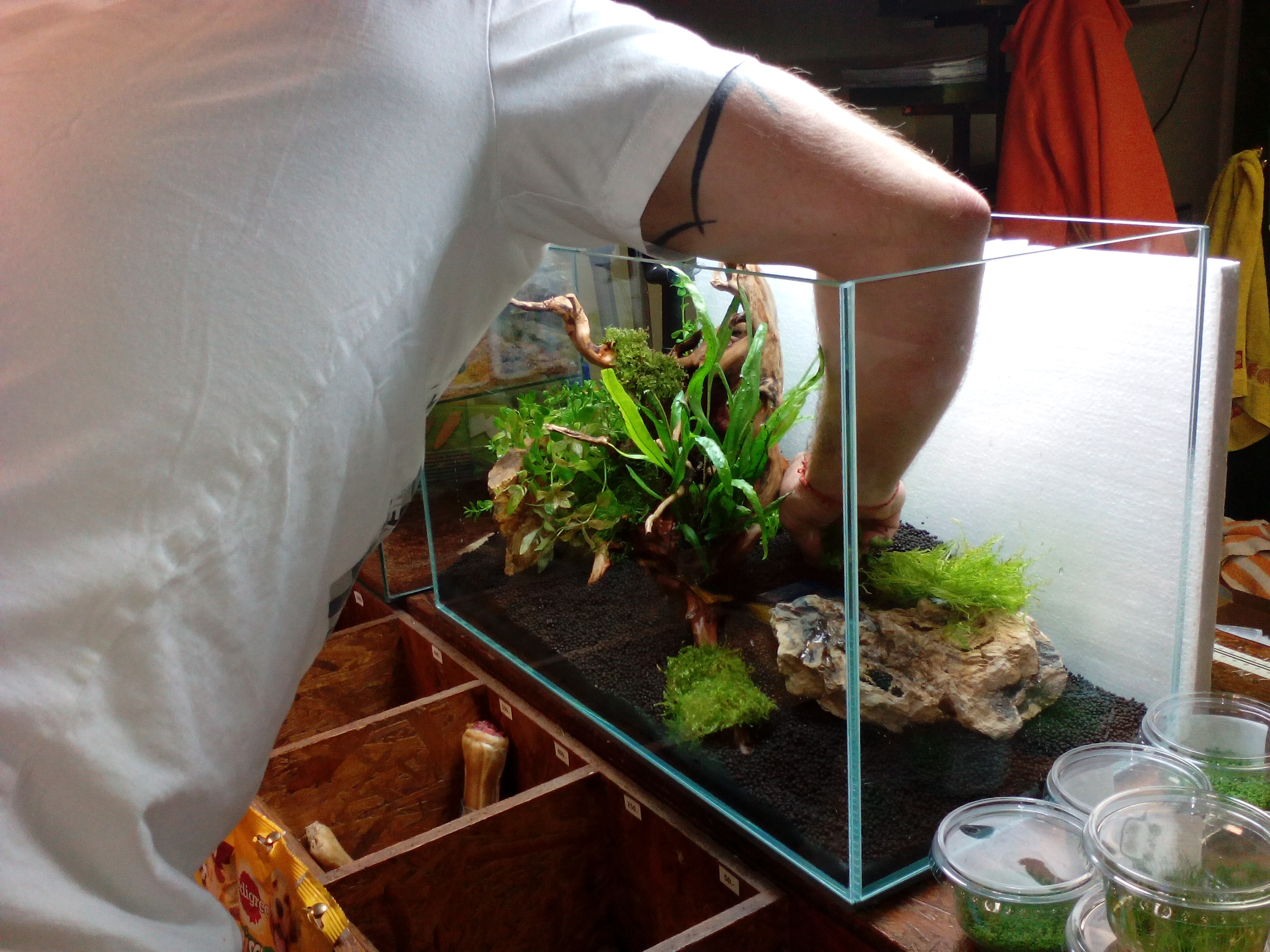 Növényes akvárium.