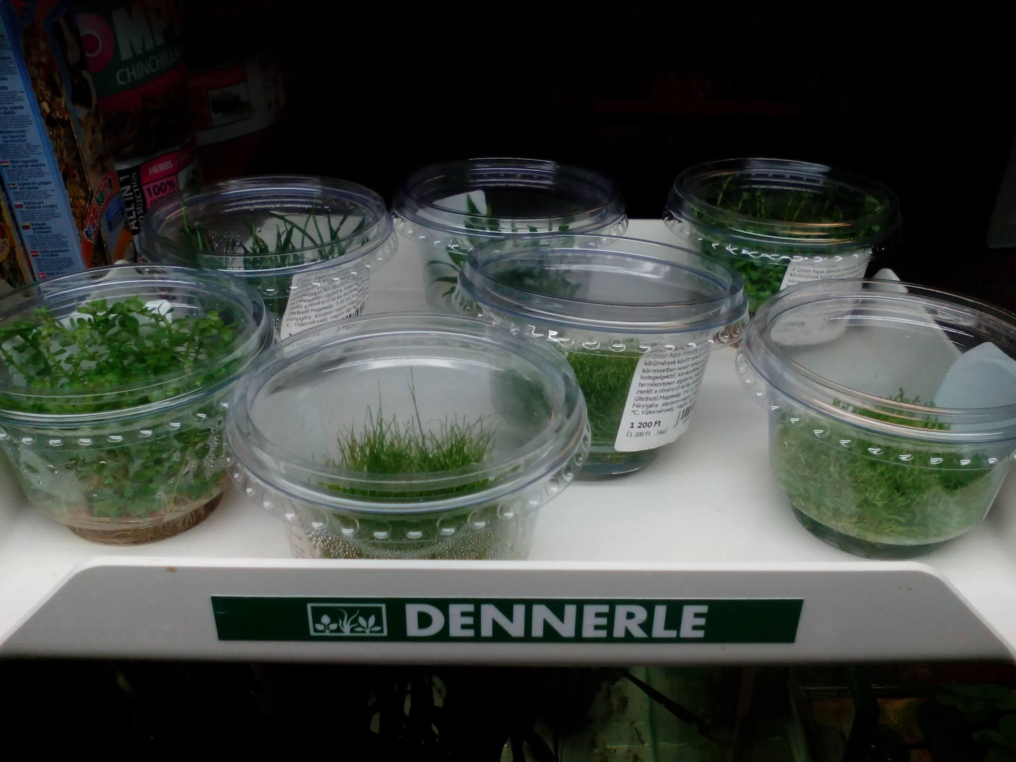 Zselés növények érkeztek.