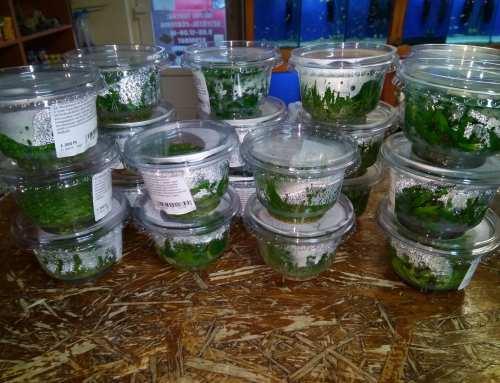 Zselés növények érkeztek