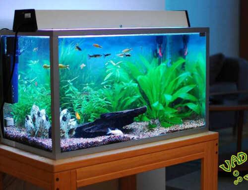 Édesvízi akvárium 1. rész