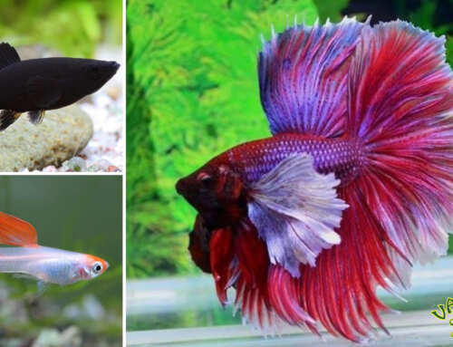 Édesvízi akvárium 2. rész